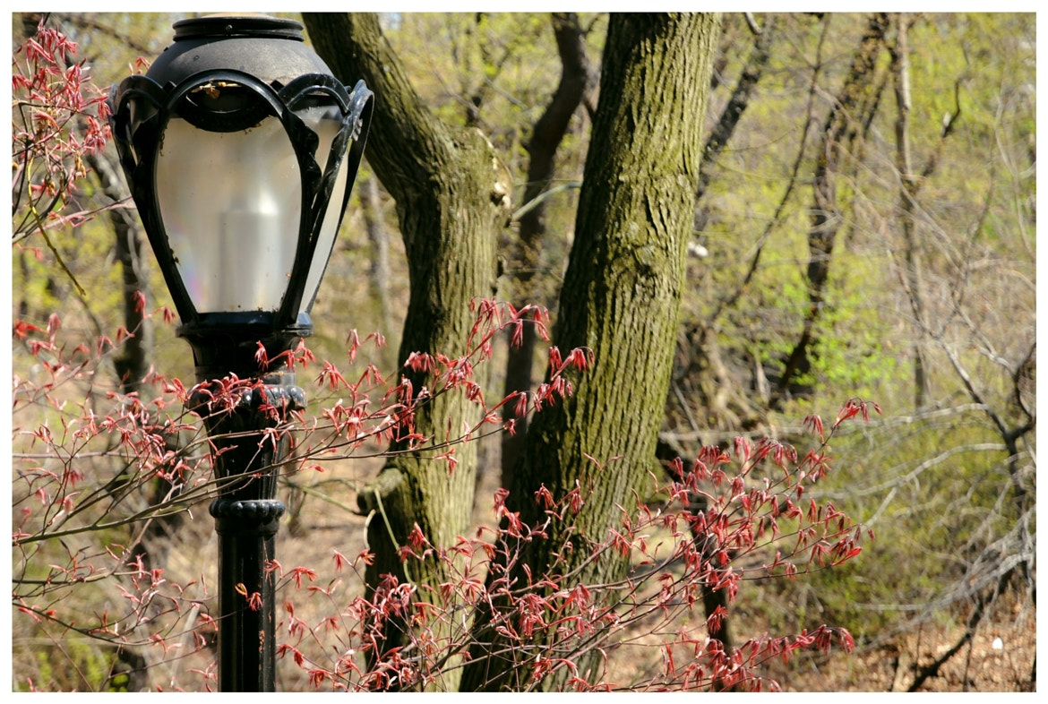 A picture by Gersande La Flèche of a lamp post in Central Park, NYC.