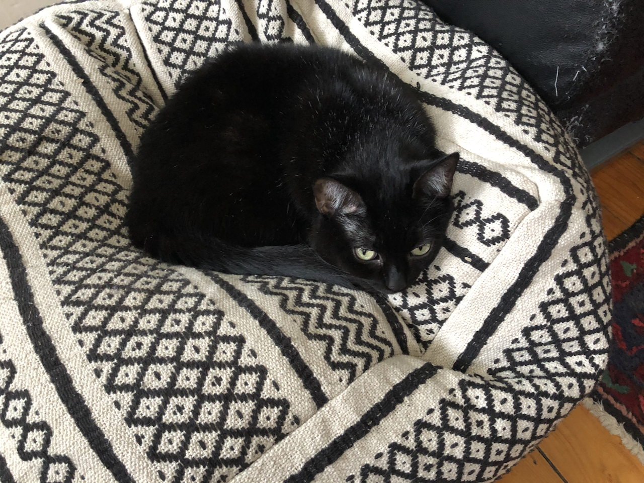Here is a photo of my cat Luna on her poof-throne.