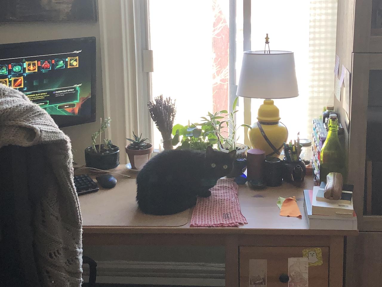 Une photo de Luna, un petit chat noir, qui s'assoit sur le haut de mon bureau et me regarde.